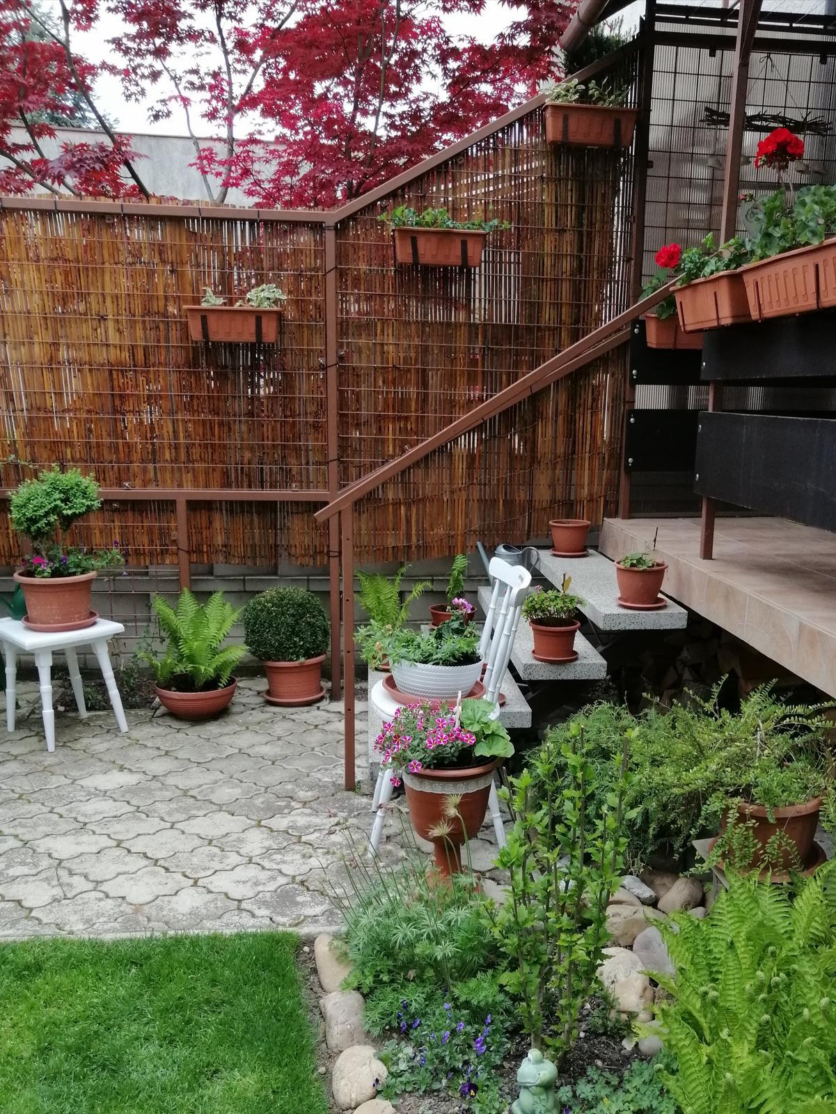 Zahrada 2020 - Obrázok č. 54