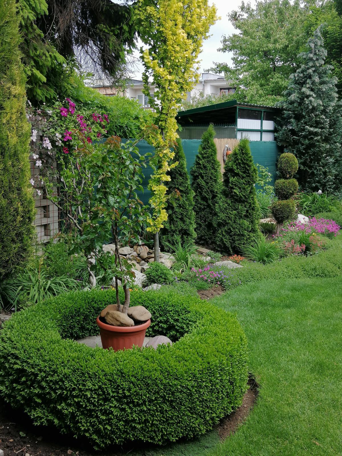 Zahrada 2020 - Obrázok č. 66