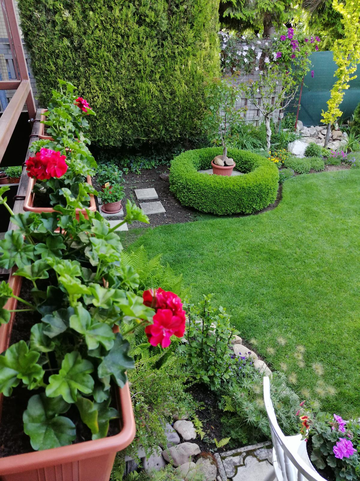 Zahrada 2020 - Obrázok č. 76
