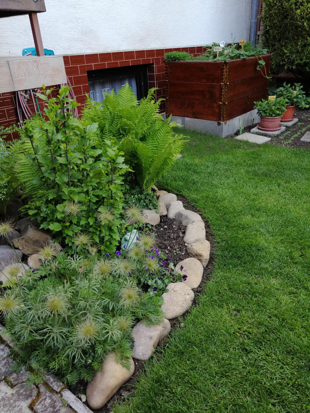 Zahrada 2020 - Obrázok č. 77