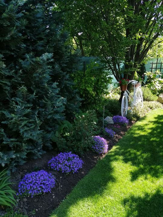 Zahrada 2020 - Obrázok č. 94