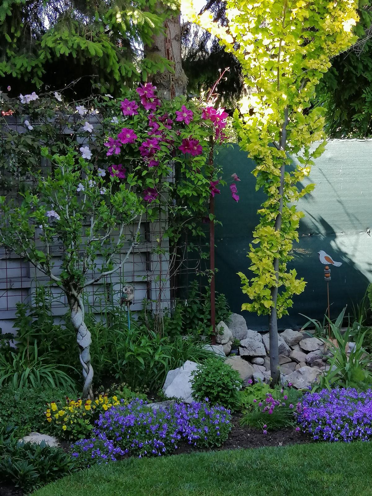 Zahrada 2020 - Obrázok č. 99