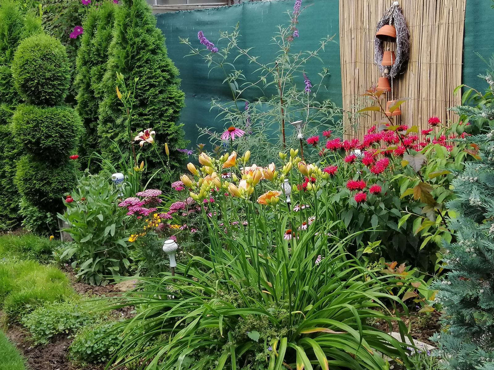 Zahrada 2020 - Obrázok č. 198