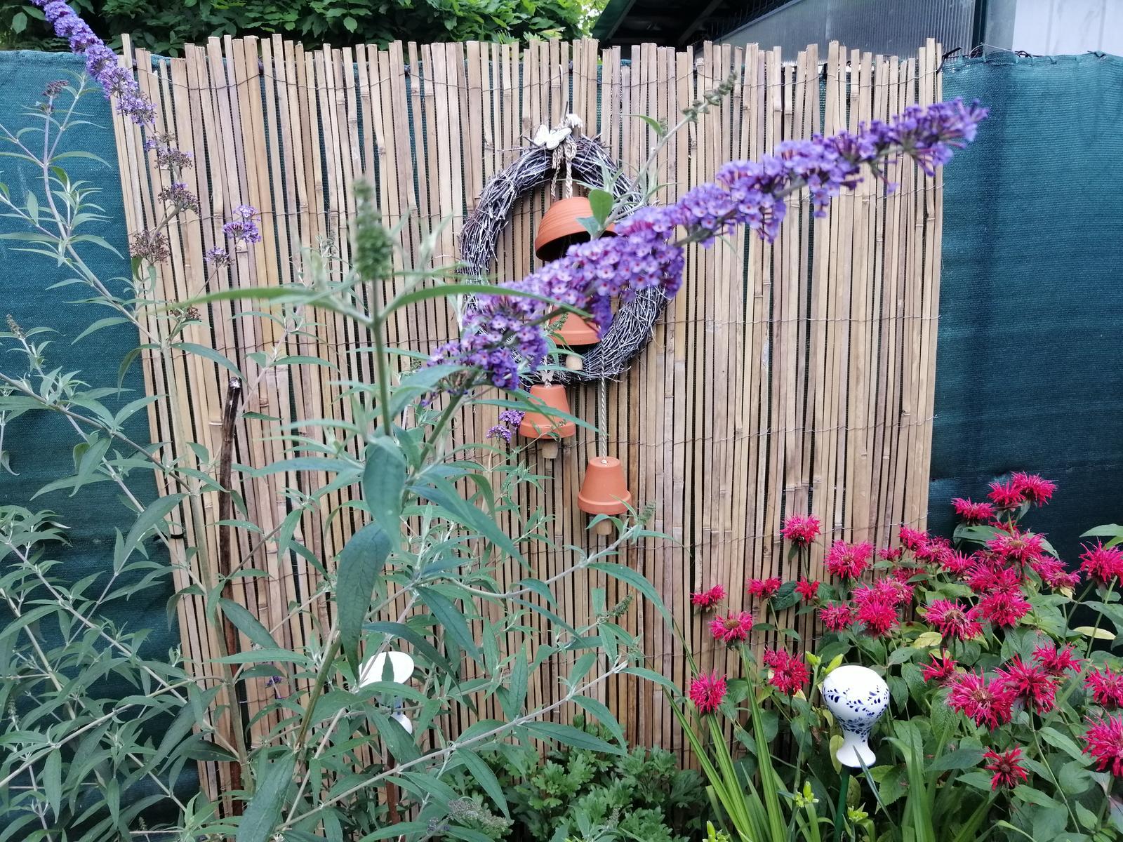 Zahrada 2020 - Obrázok č. 199