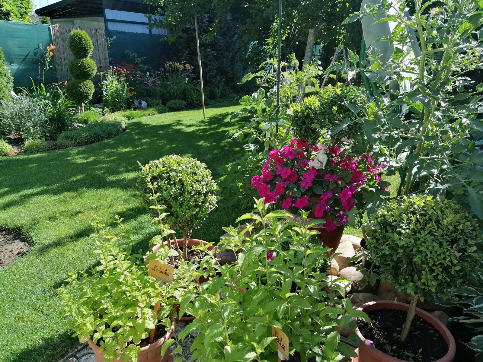Zahrada 2020 - Obrázok č. 227