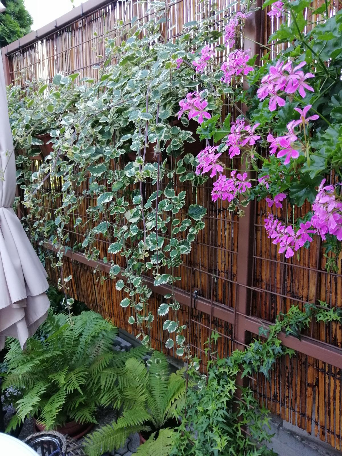Zahrada 2020 - Obrázok č. 239