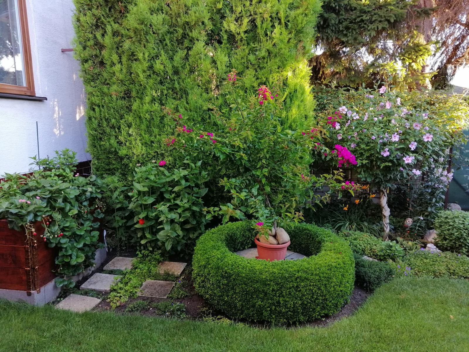 Zahrada 2020 - Obrázok č. 245