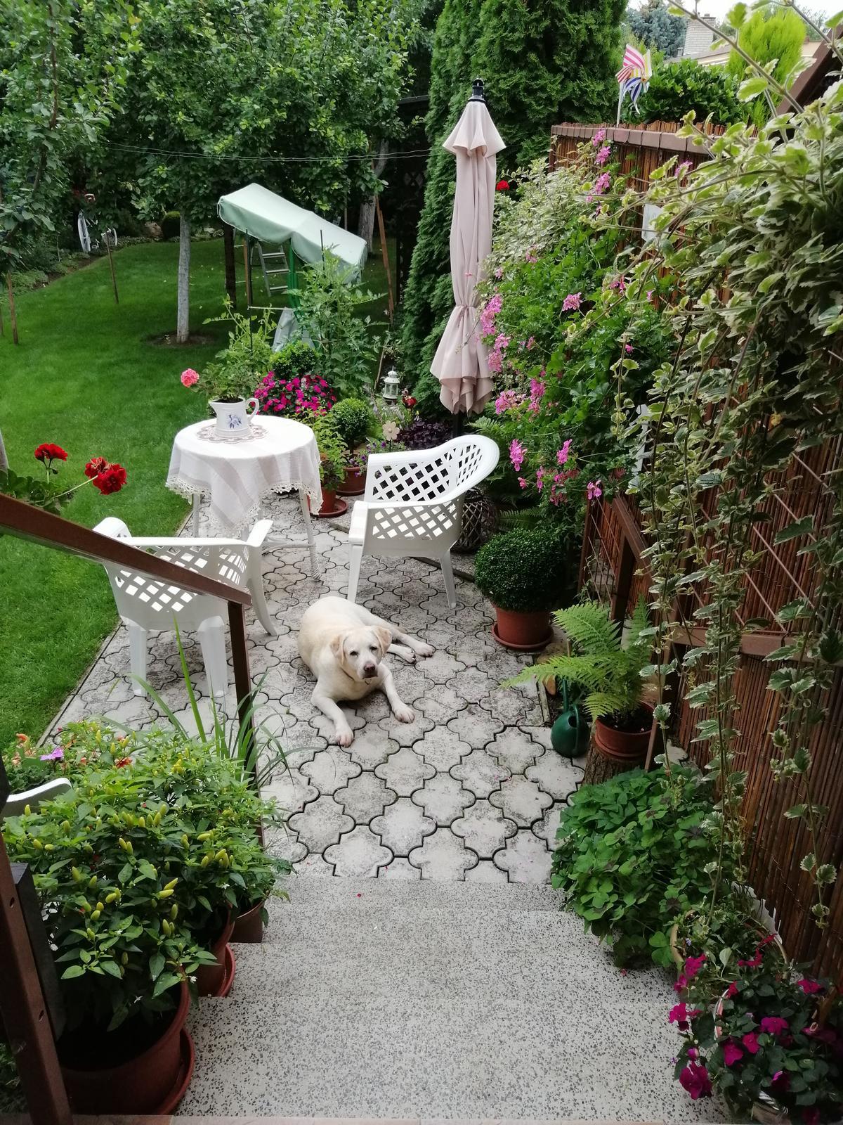 Zahrada 2020 - Obrázok č. 254