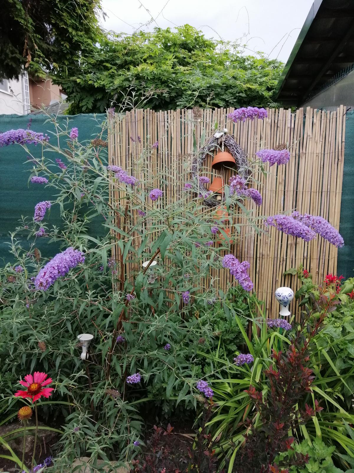 Zahrada 2020 - Obrázok č. 264