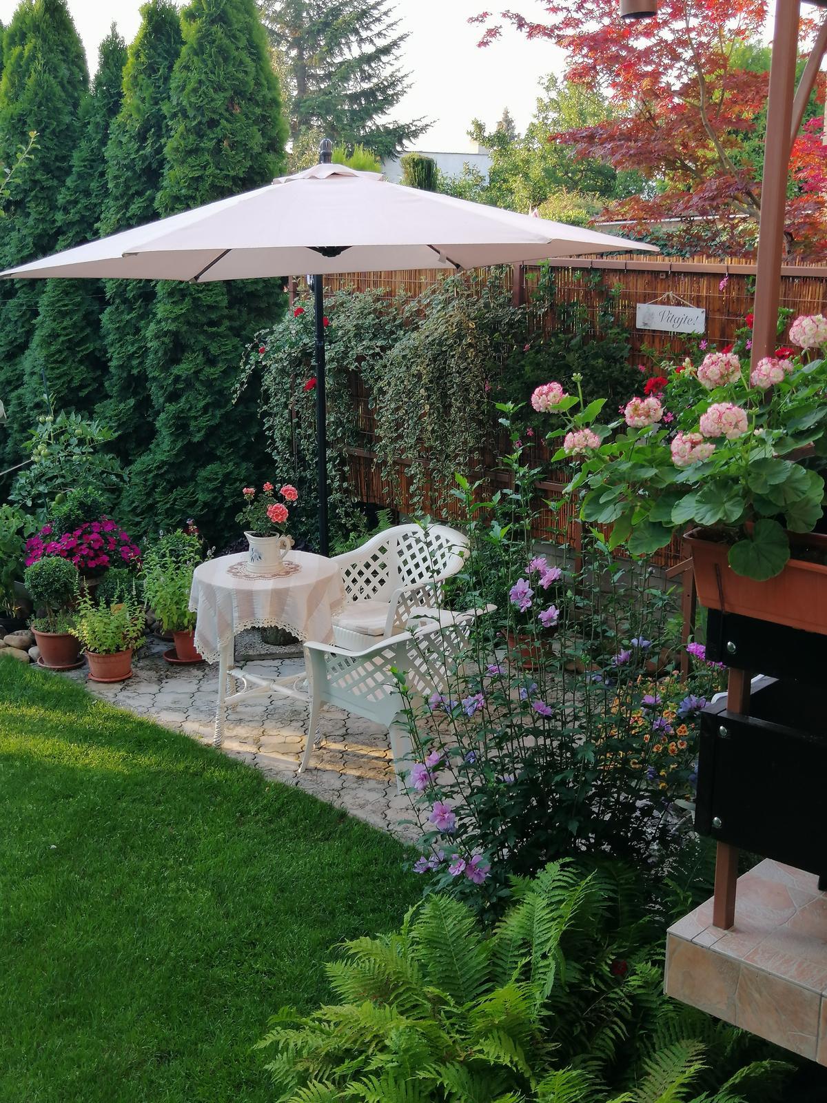 Zahrada 2020 - Obrázok č. 272