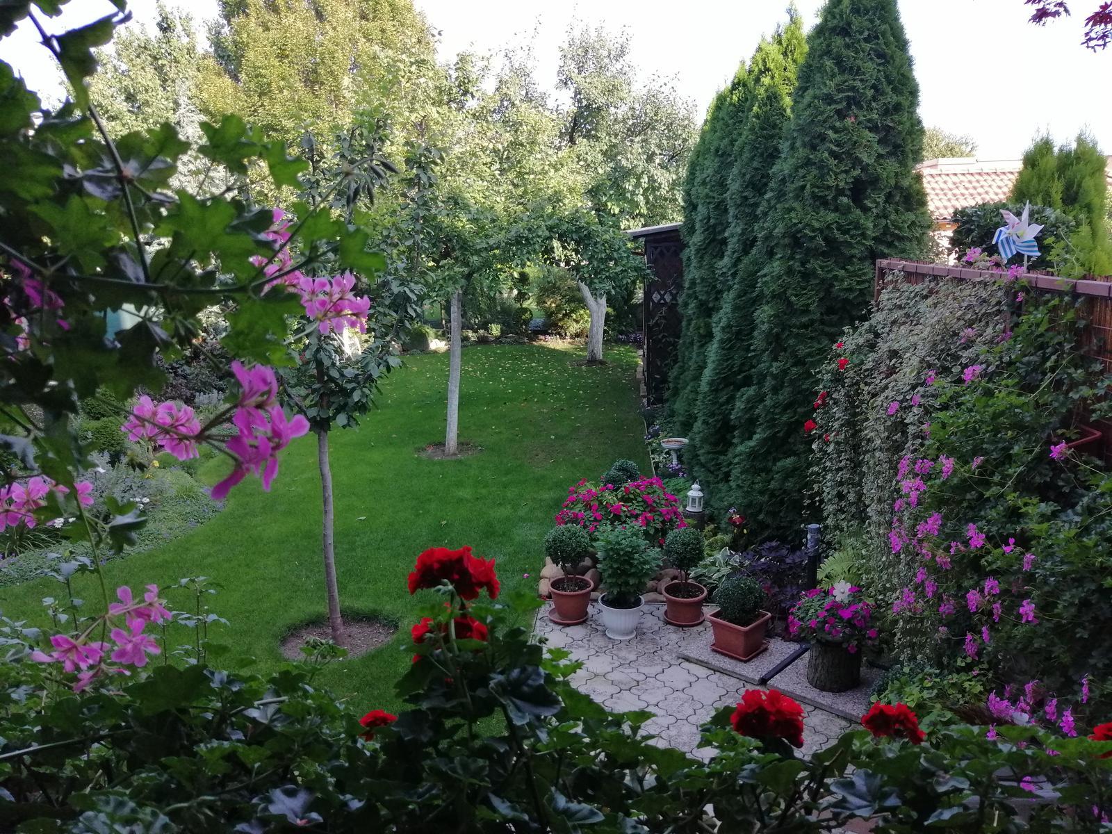 Zahrada 2020 - Obrázok č. 338