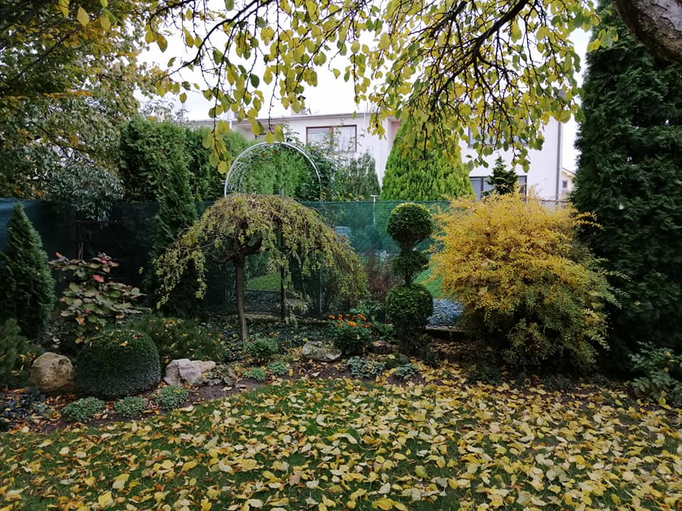 Zahrada 2020 - Obrázok č. 348