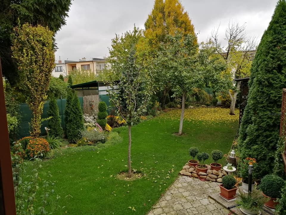 Zahrada 2020 - Obrázok č. 349