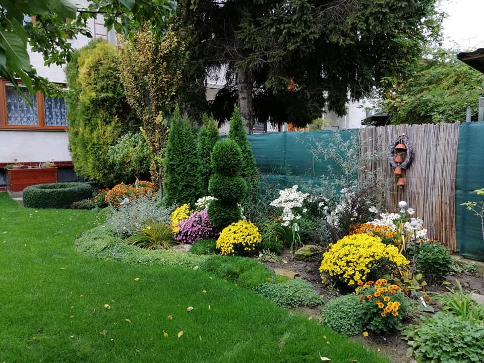 Zahrada 2020 - Obrázok č. 352