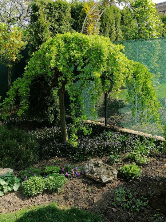 Záhrada 2021 - Obrázok č. 27
