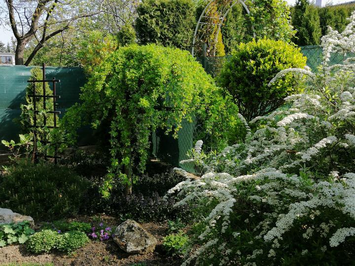 Záhrada 2021 - Obrázok č. 28