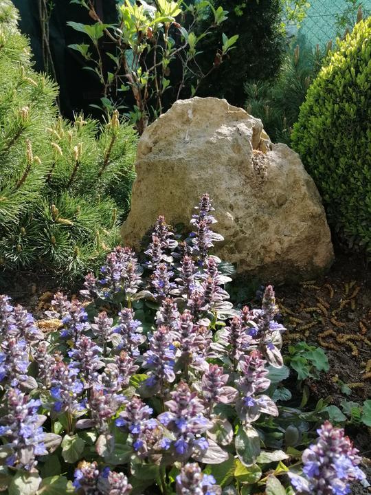 Záhrada 2021 - Obrázok č. 48