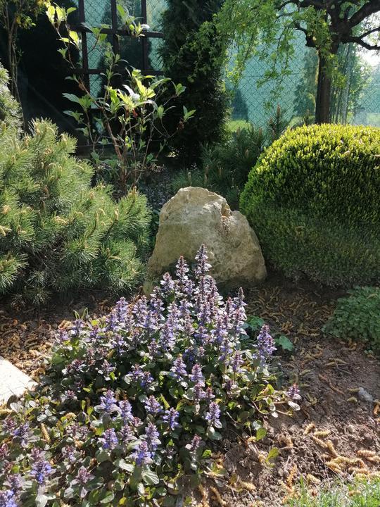 Záhrada 2021 - Obrázok č. 49