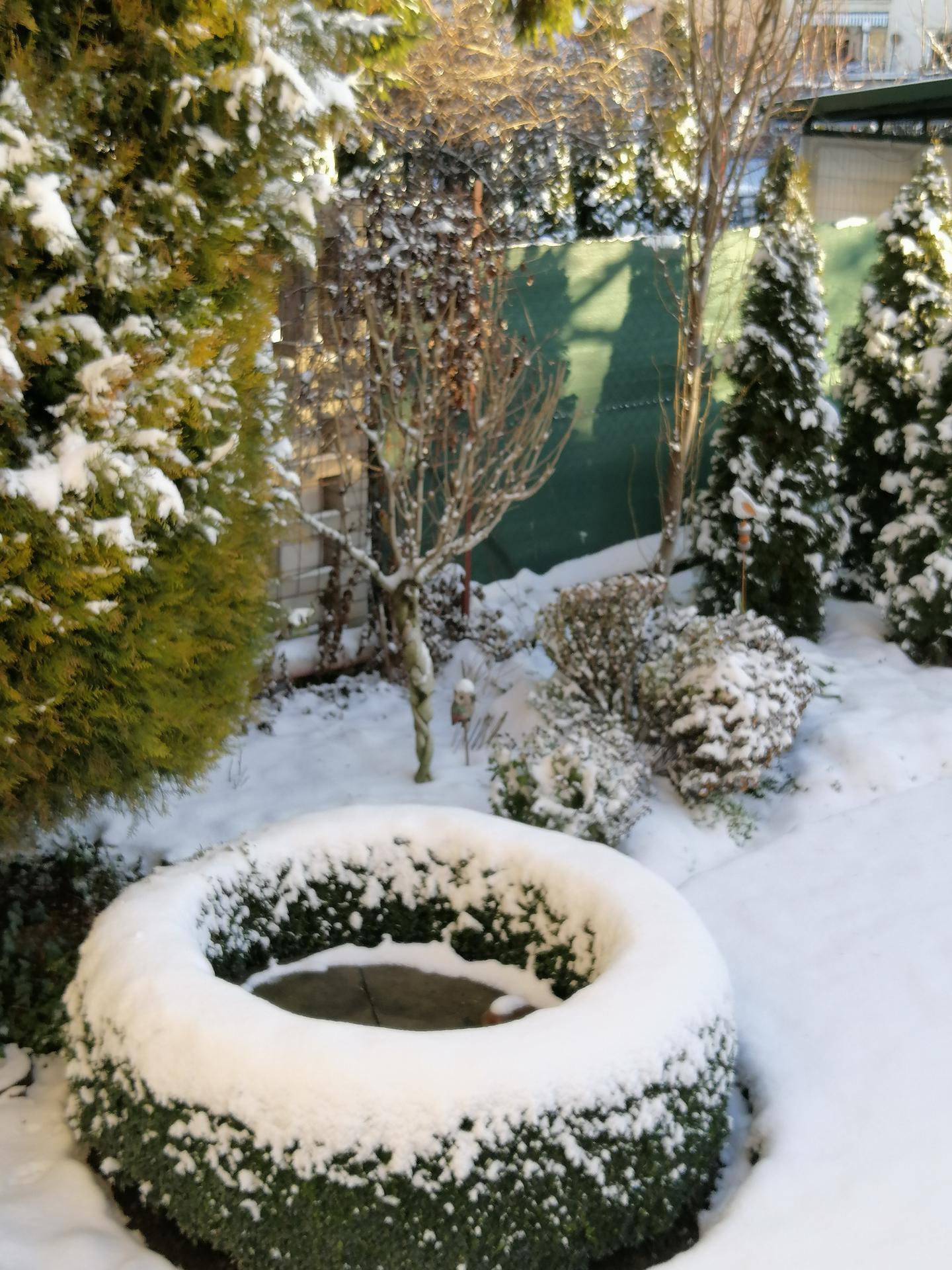 Zahrada 2020 - Obrázok č. 360