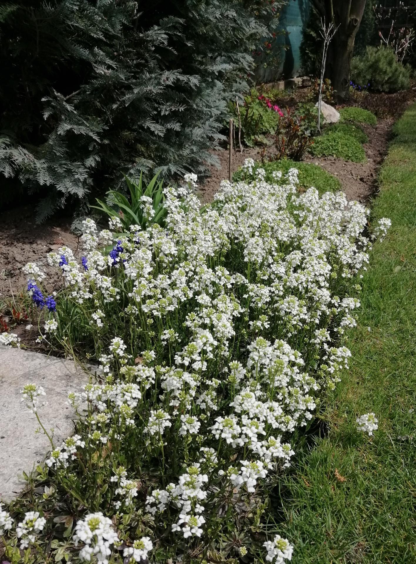 Záhrada 2021 - Obrázok č. 11