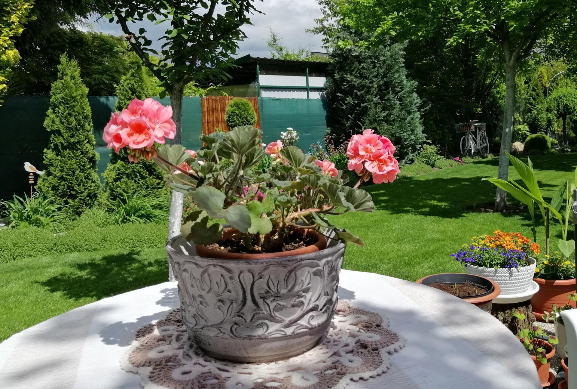 Záhrada 2021 - Obrázok č. 55