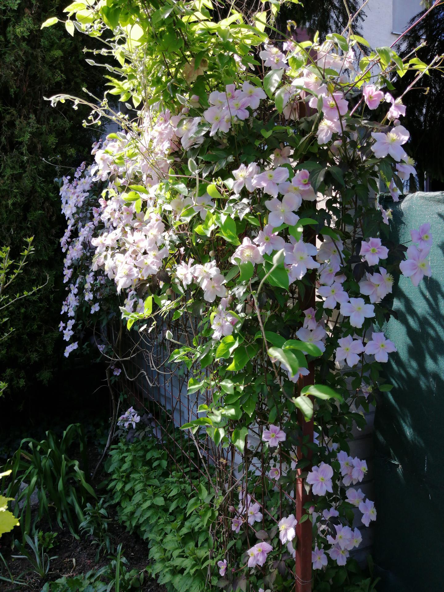 Záhrada 2021 - Obrázok č. 71