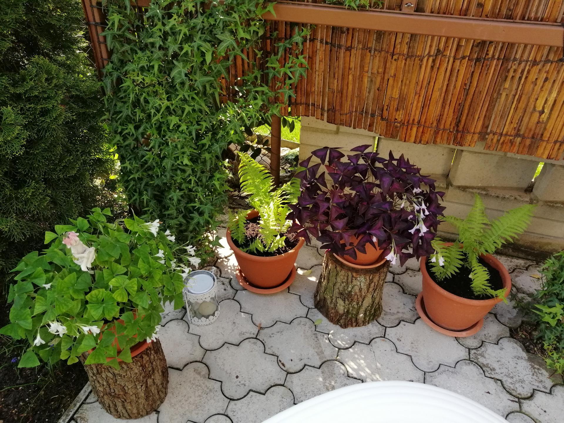 Záhrada 2021 - Obrázok č. 79