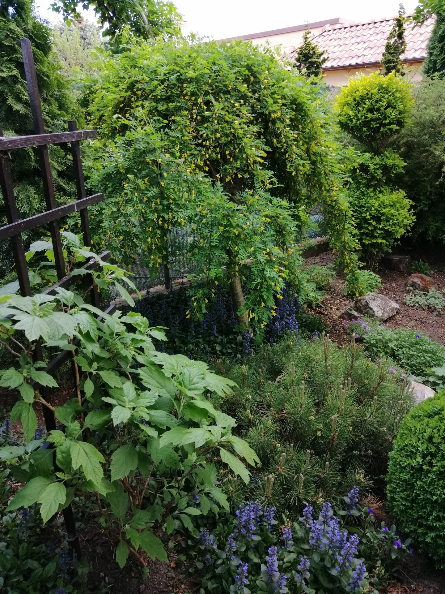 Záhrada 2021 - Obrázok č. 68