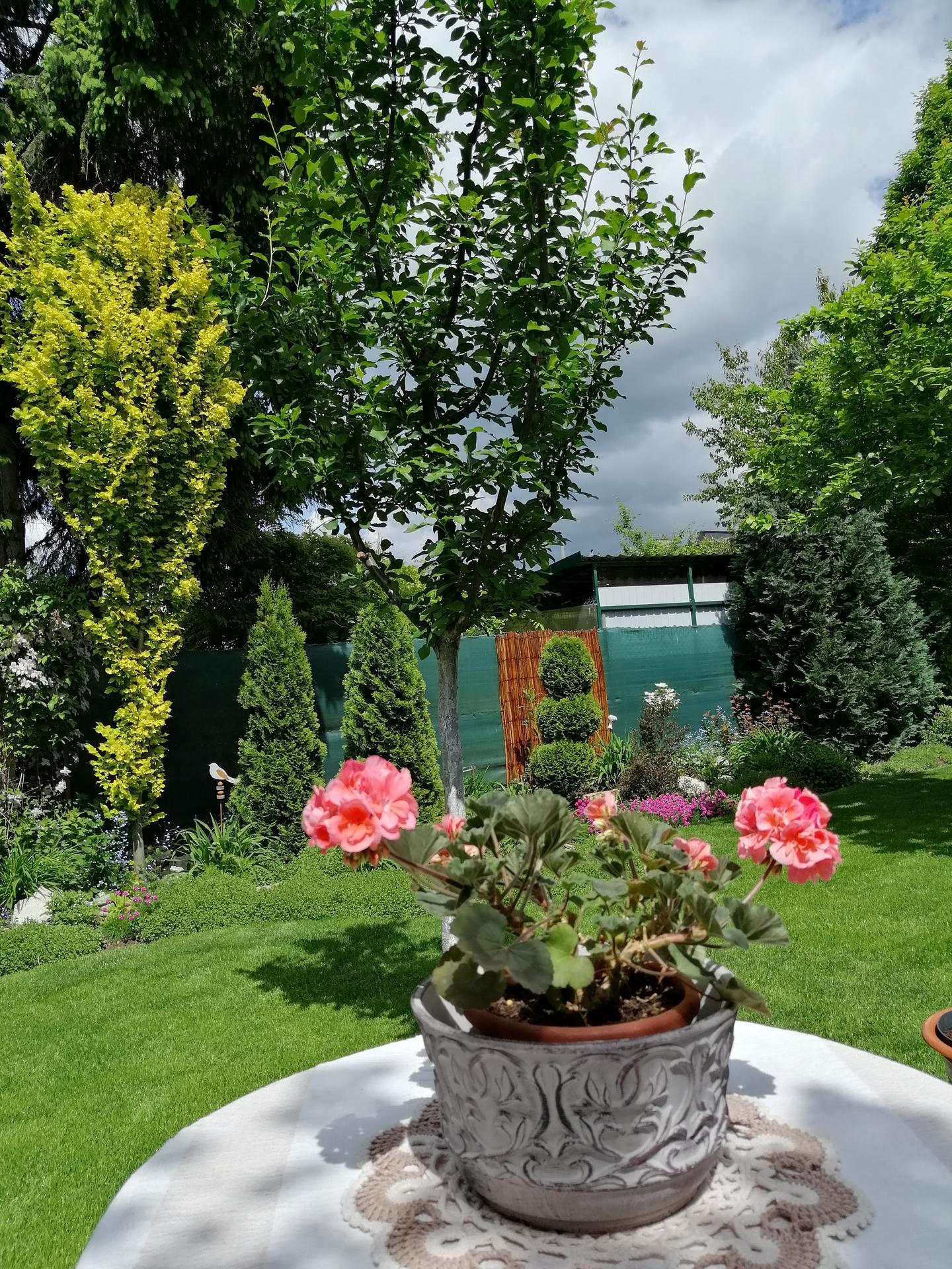 Záhrada 2021 - Obrázok č. 60