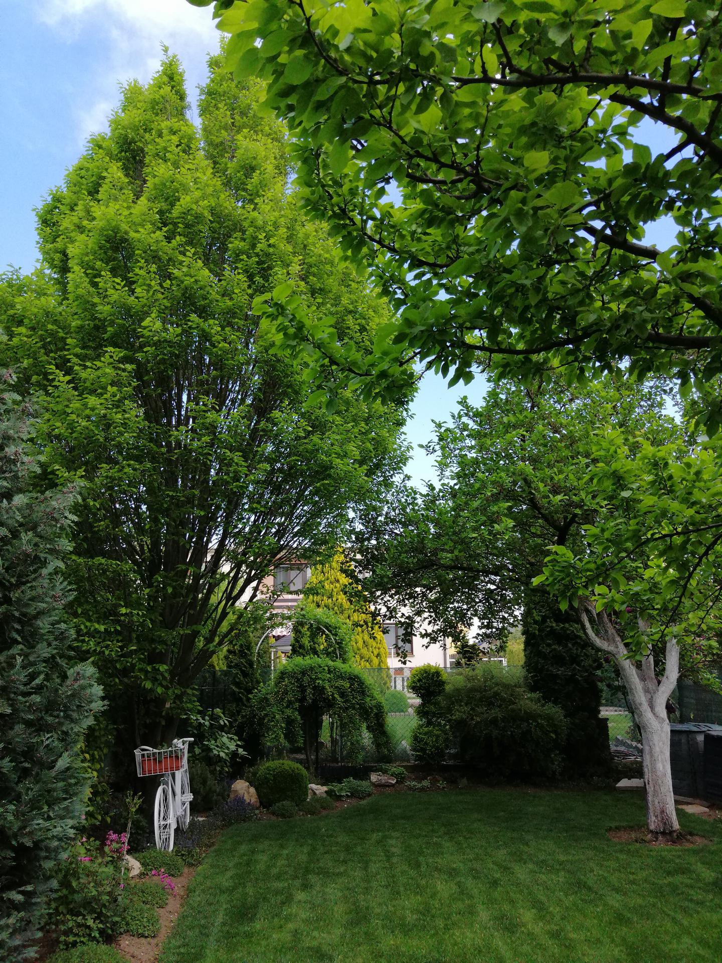 Záhrada 2021 - Obrázok č. 57
