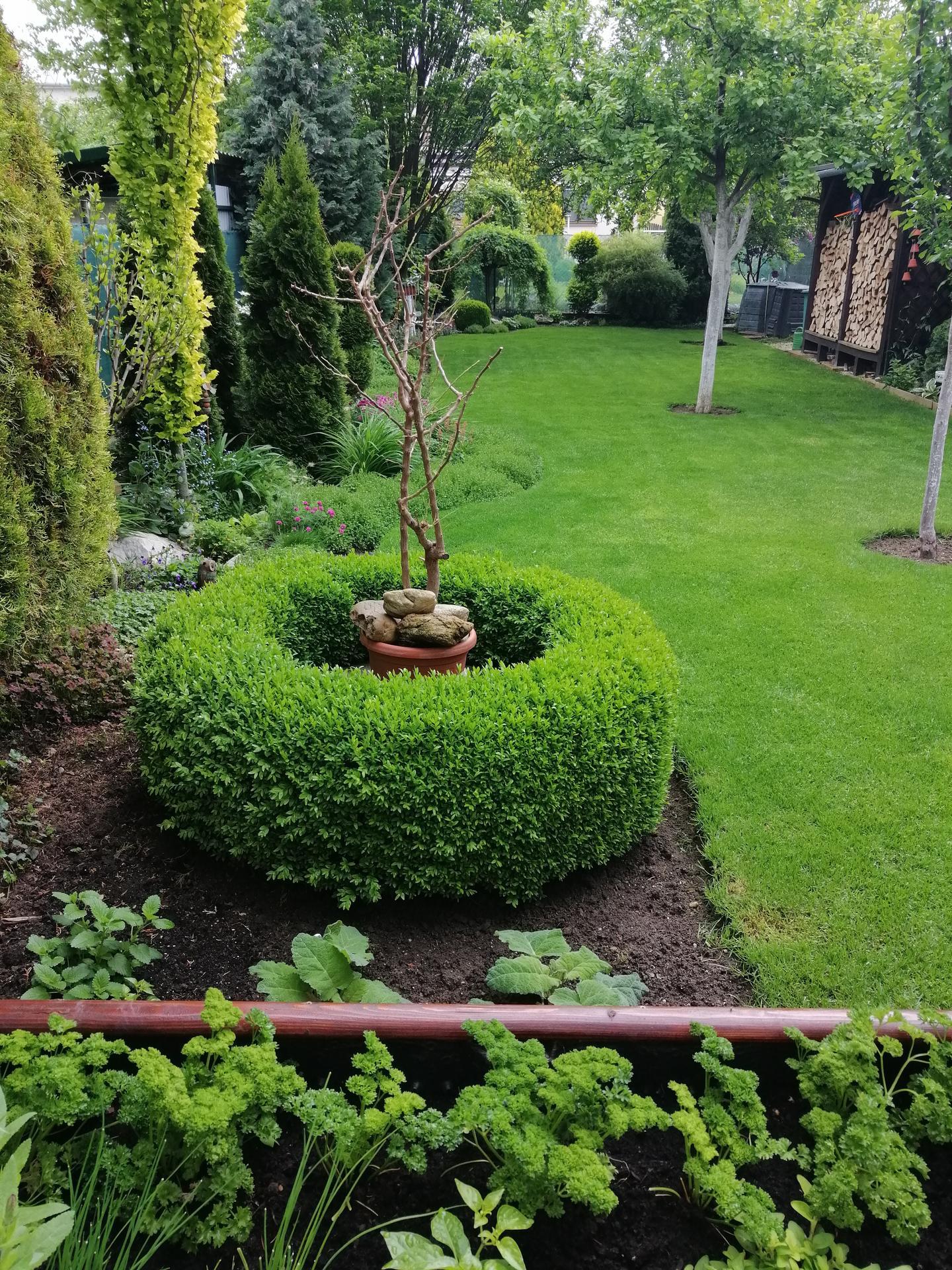 Záhrada 2021 - Obrázok č. 64