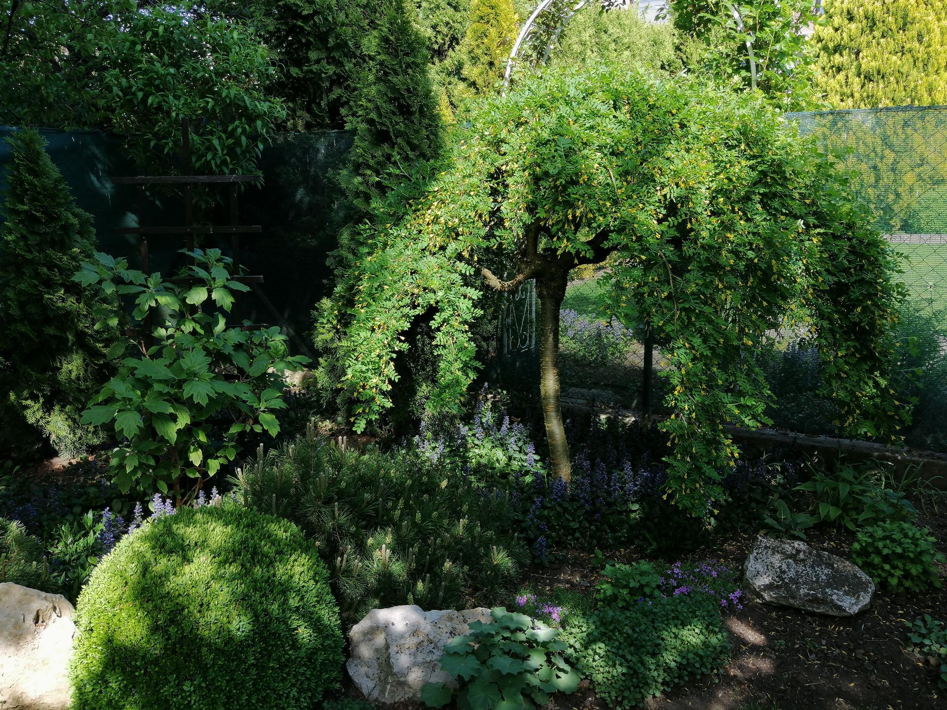 Záhrada 2021 - Obrázok č. 72
