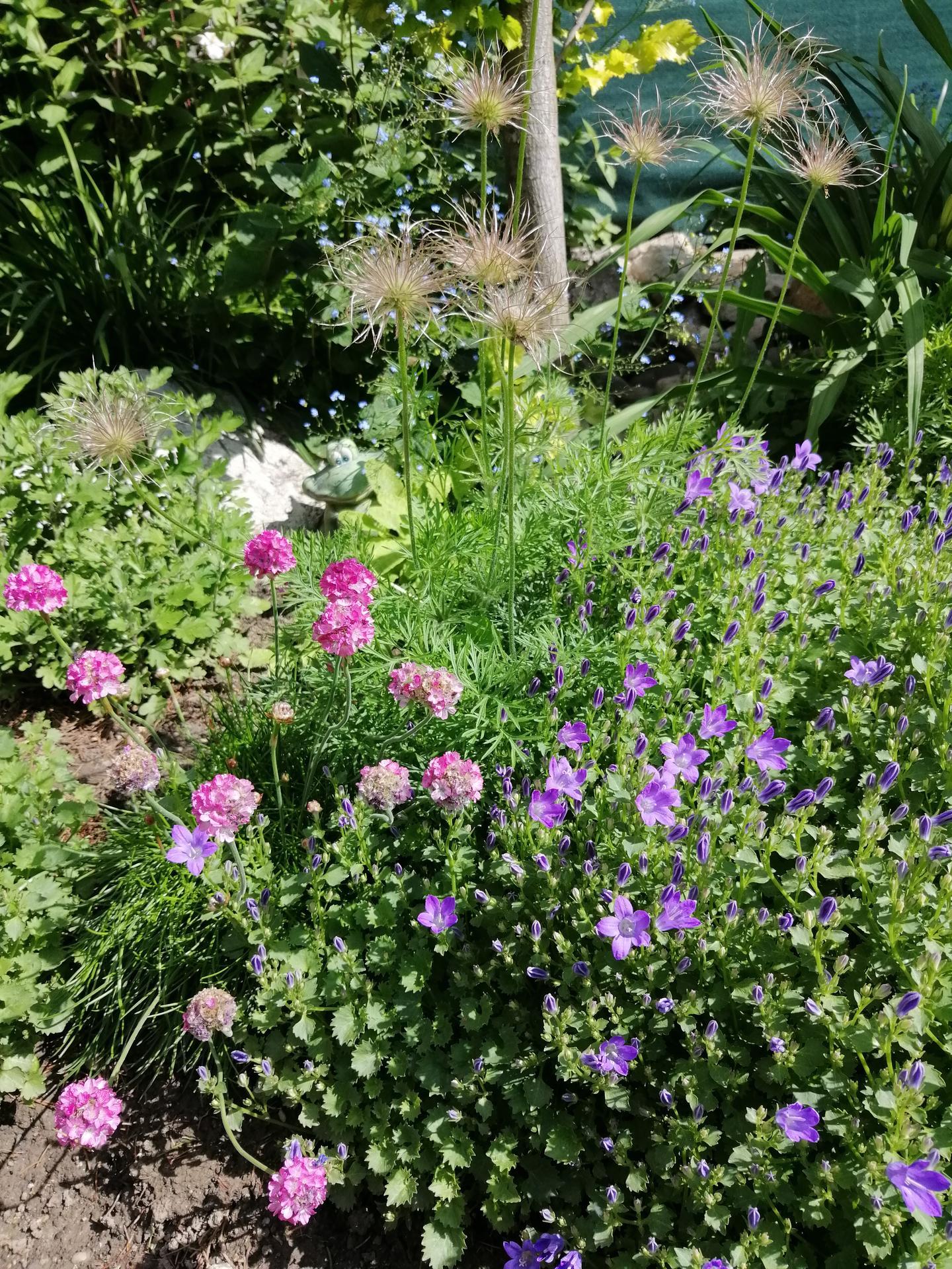 Záhrada 2021 - Obrázok č. 93