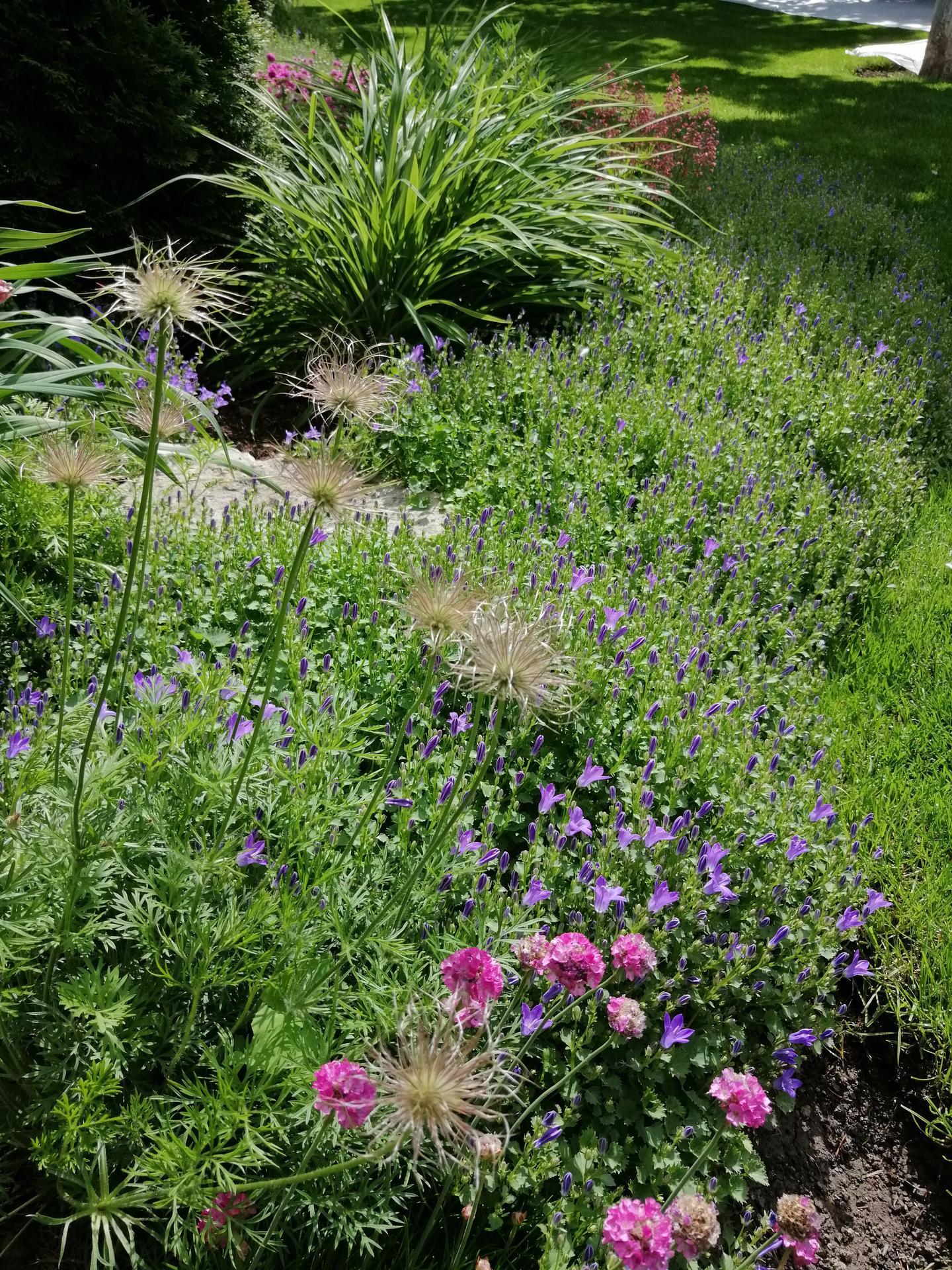 Záhrada 2021 - Obrázok č. 85