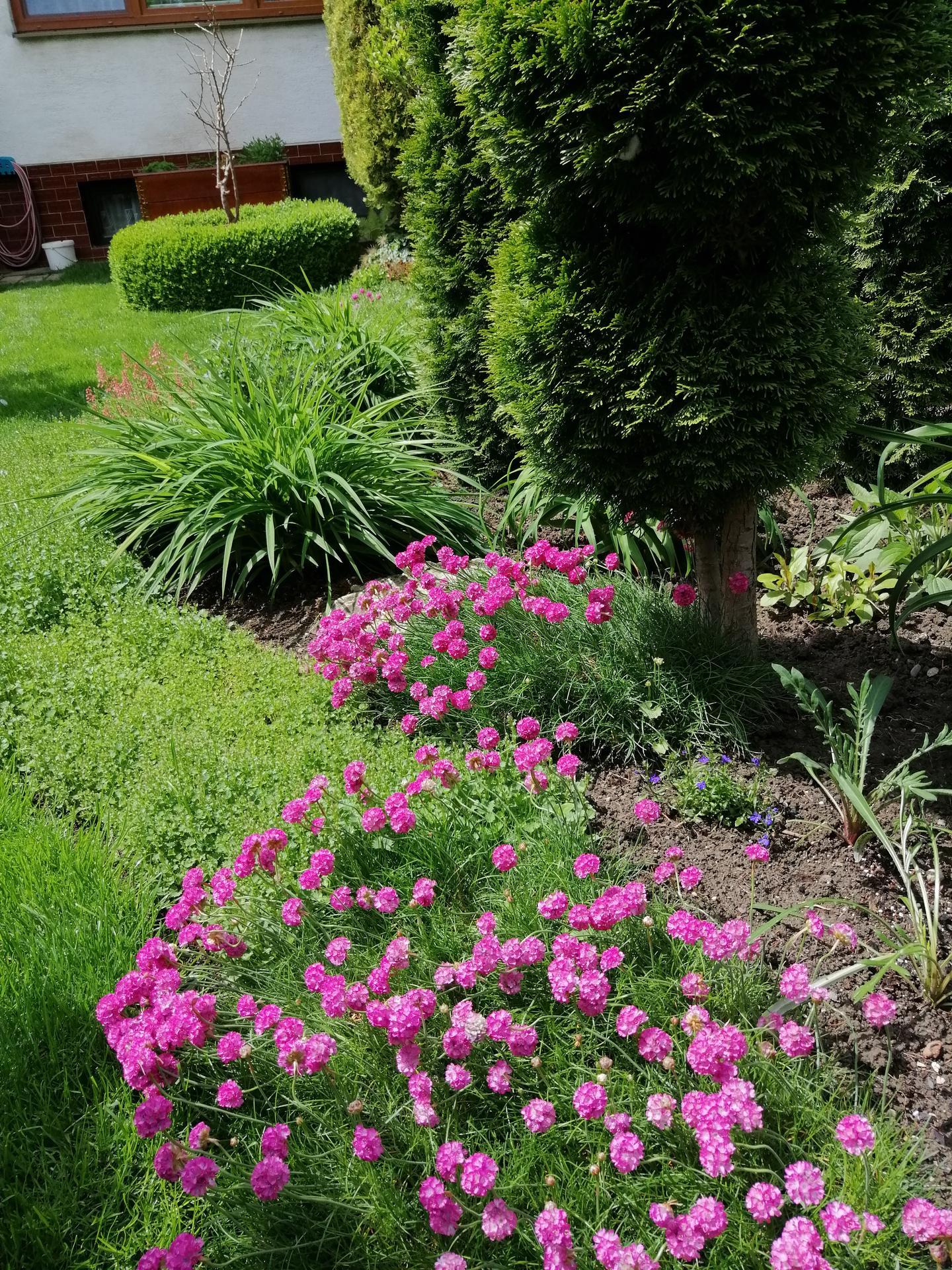 Záhrada 2021 - Obrázok č. 95