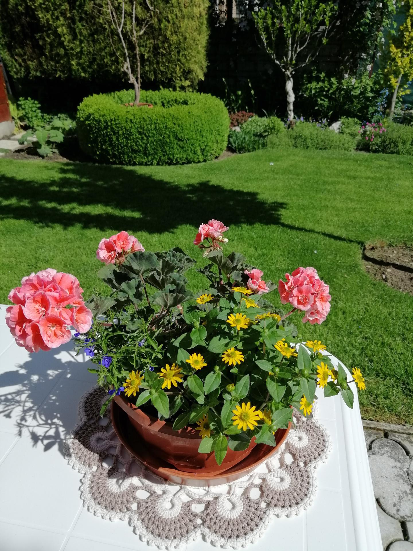 Záhrada 2021 - Obrázok č. 98