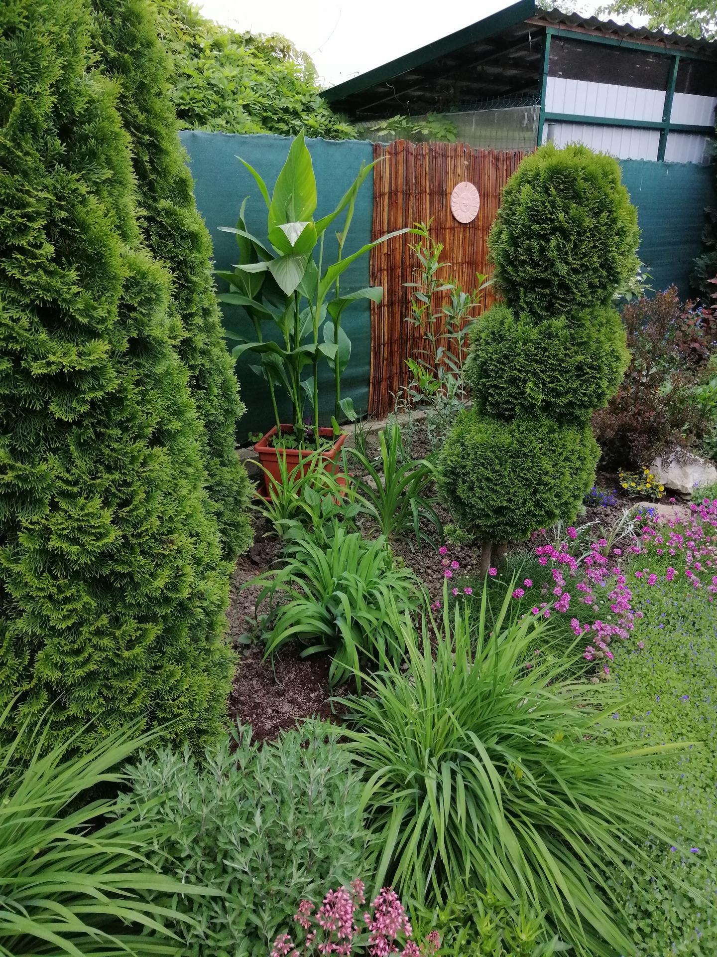 Záhrada 2021 - Obrázok č. 96