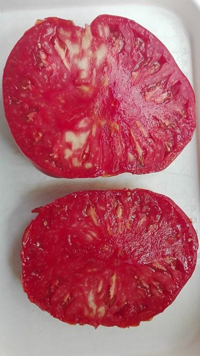 paradajky - Obrázok č. 1