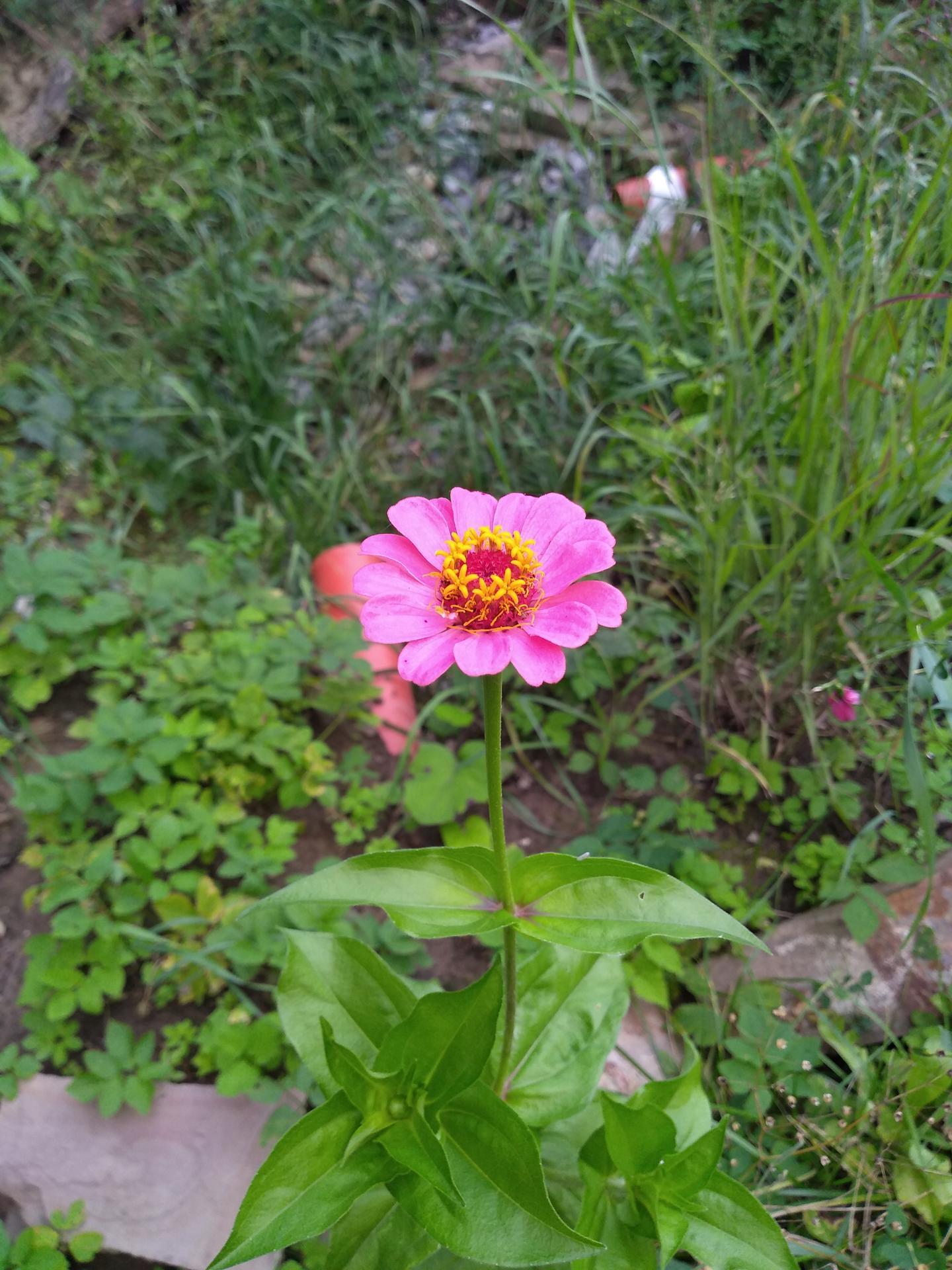 Divoká dažďová záhrada z archeologickej jamy - Obrázok č. 8