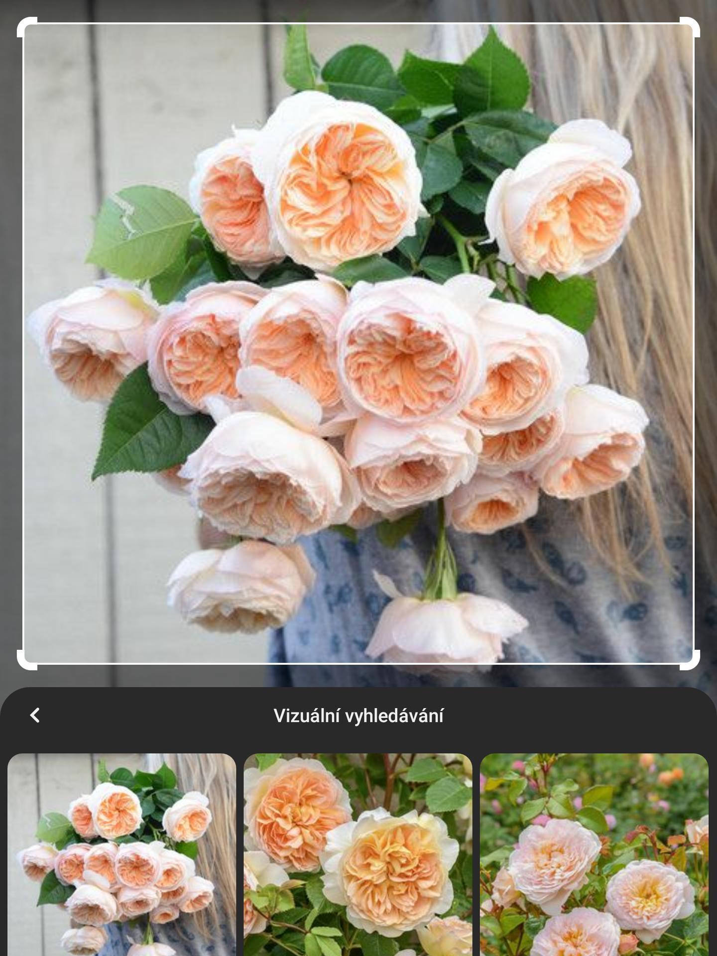 Vrabcovi 10.9.2022 - Družičky budou mít tyto růže co maji napodobovat pivoňky. Já a maminky a ženich a tatínek budeme mít pivoňky