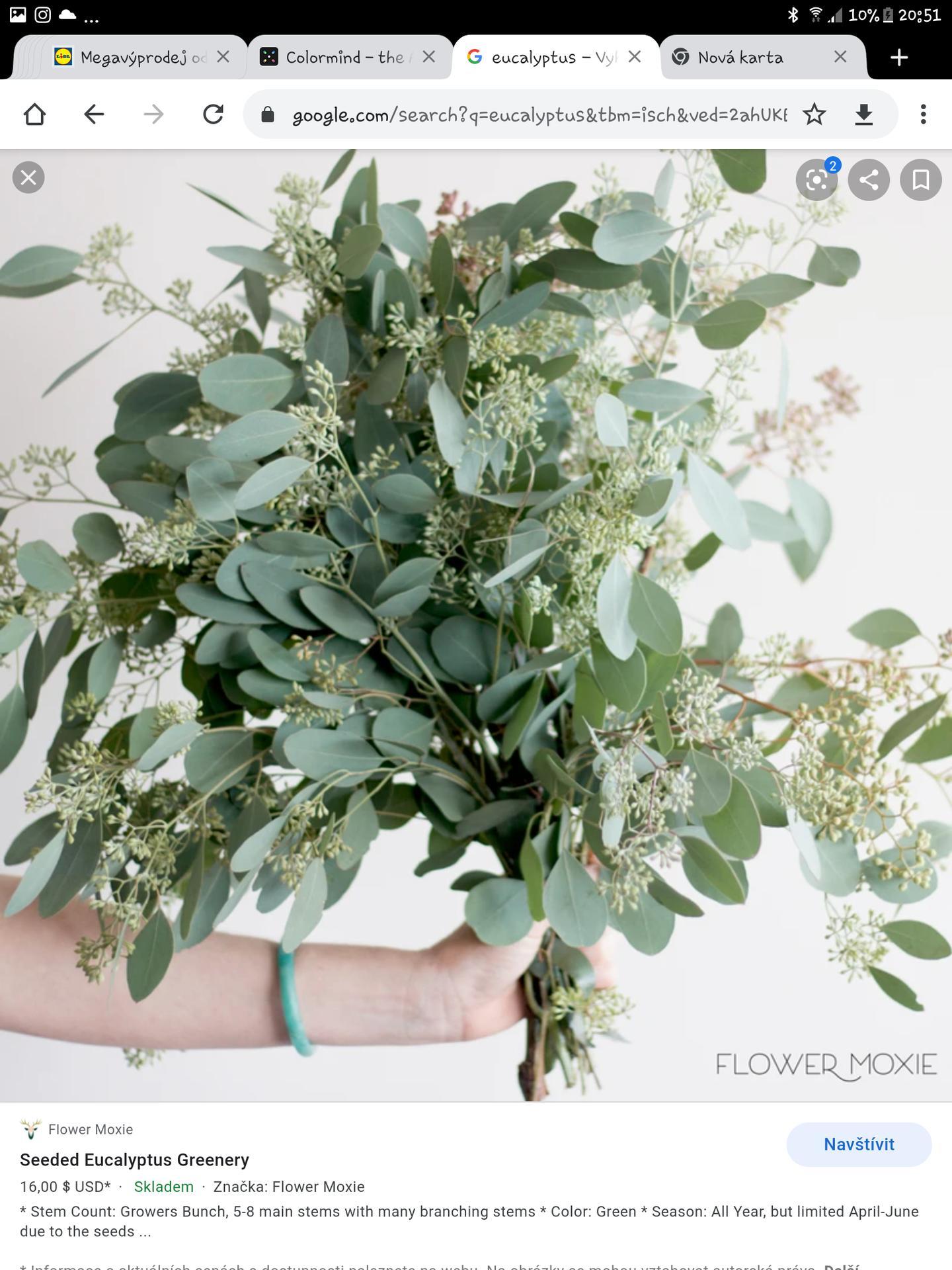 Moje představy - Tento eukalyptus