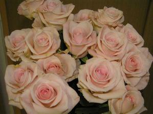 fotka růží - tyto budu mít ještě s champagne růžemi ve svatební kytce.