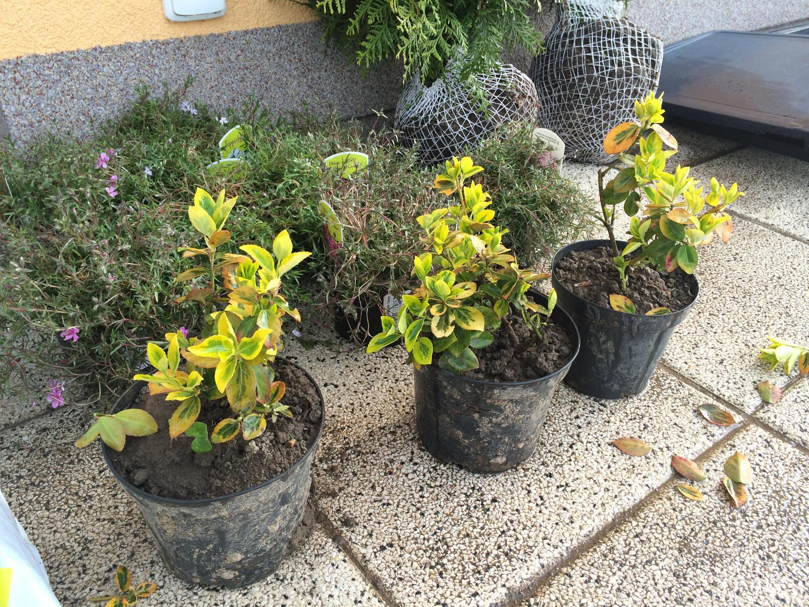 Zahrada- jak to vsechno zacalo.. - darecky od budouci tchyne ze zahradky :)