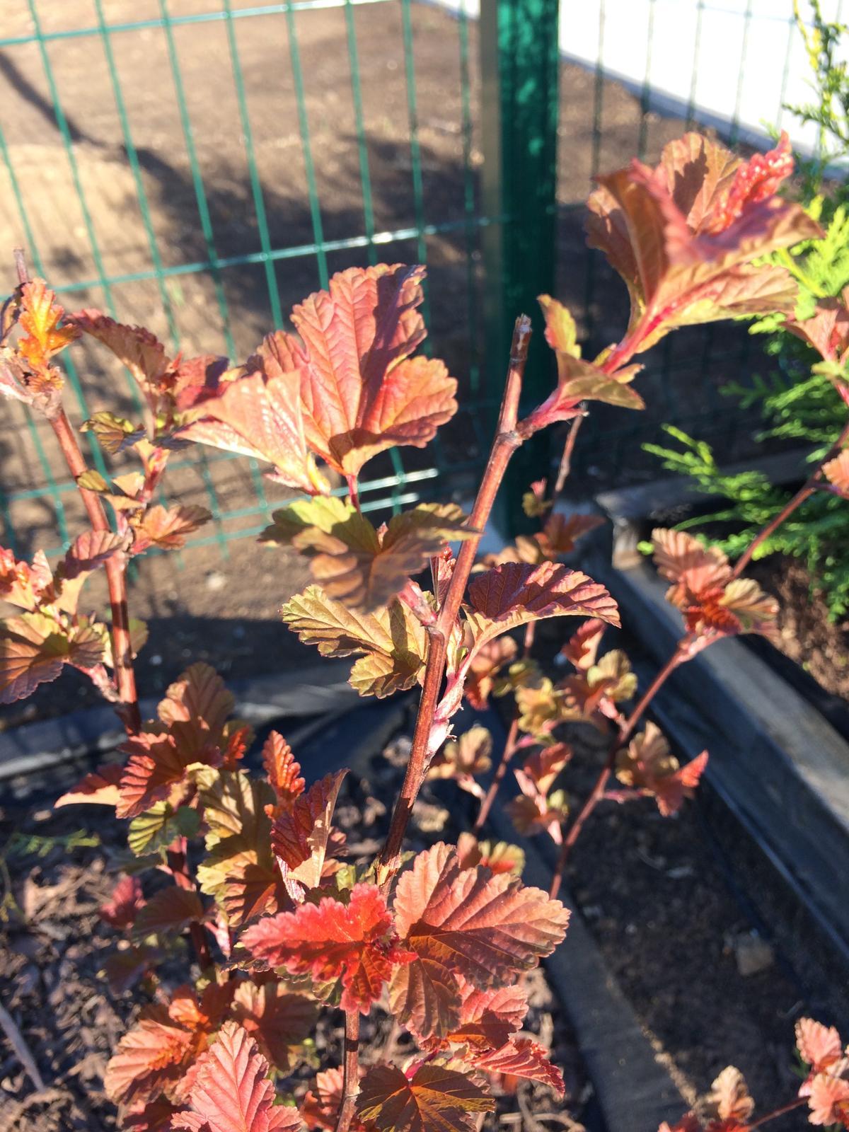 Zahrada- jak to vsechno zacalo.. - moja najvacsia laska.. po tom co sa zafarbila do cervena, sa na nu nemozem vynadivat :)