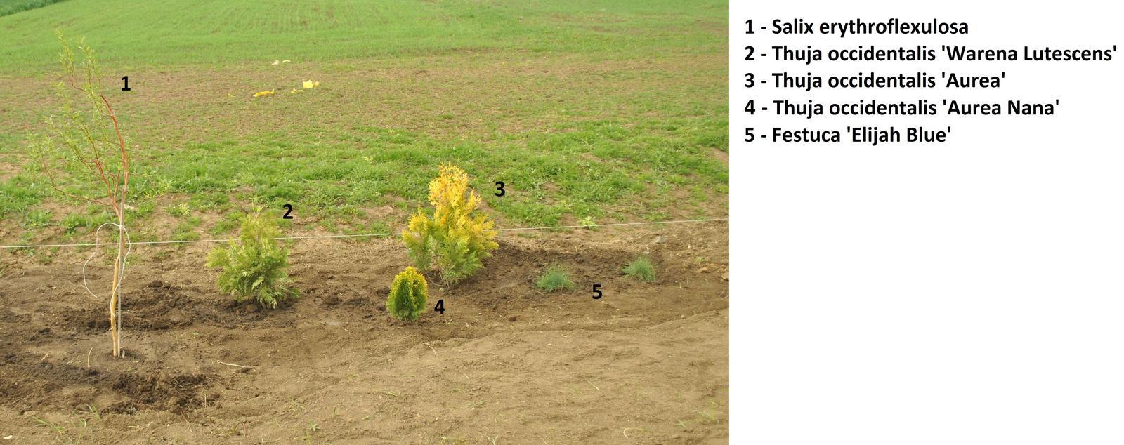 Zahrada- jak to vsechno zacalo.. - Obrázek č. 404