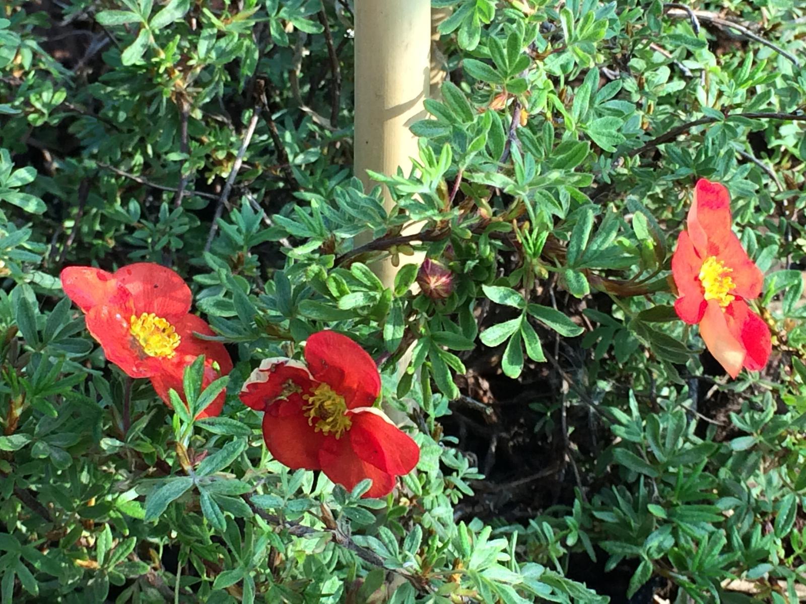 Zahrada- jak to vsechno zacalo.. - Aj mochnicka sa uz prebrala ku kvetu :)