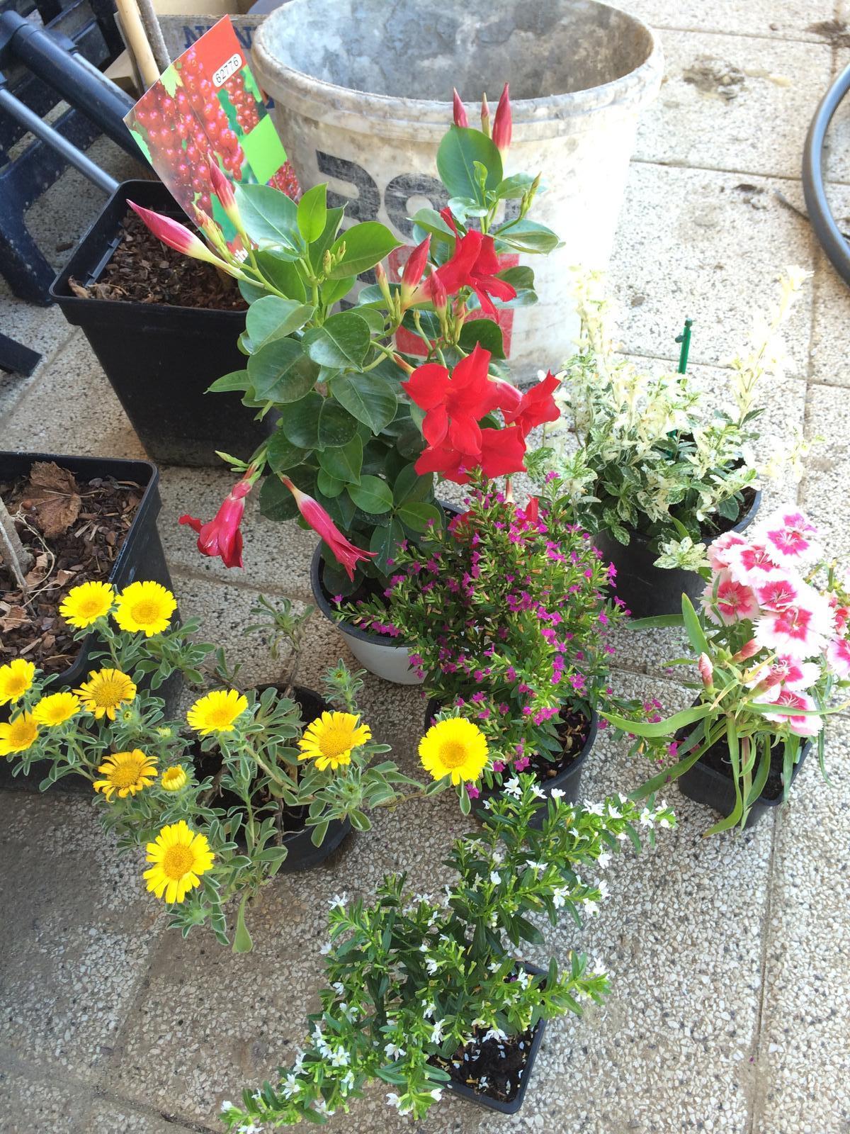 Zahrada- jak to vsechno zacalo.. - Darcek od babicky.. Kto vi jakykoliv nazev kytek na obrazku budu rada :)