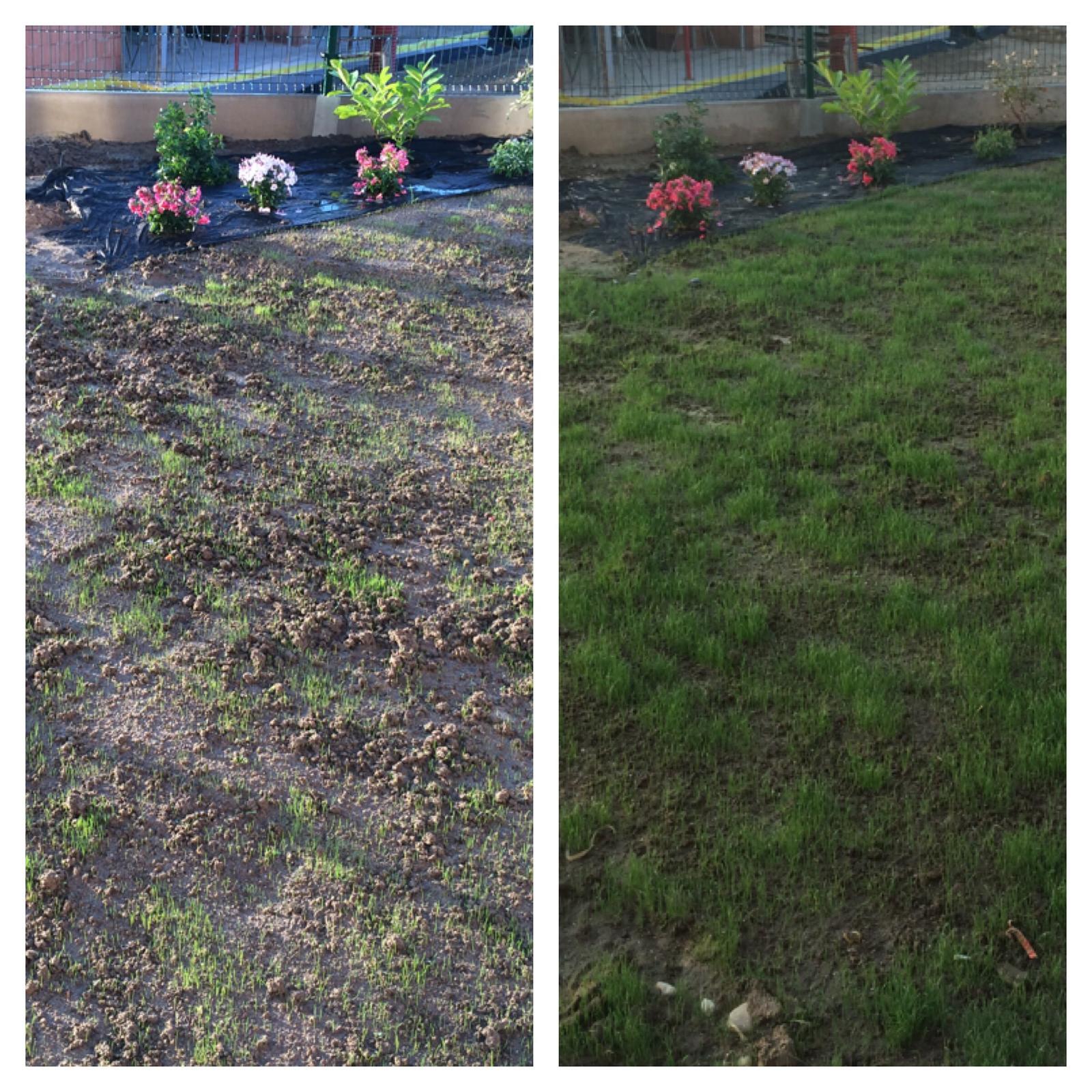 Zahrada- jak to vsechno zacalo.. - Po 4 dnech..