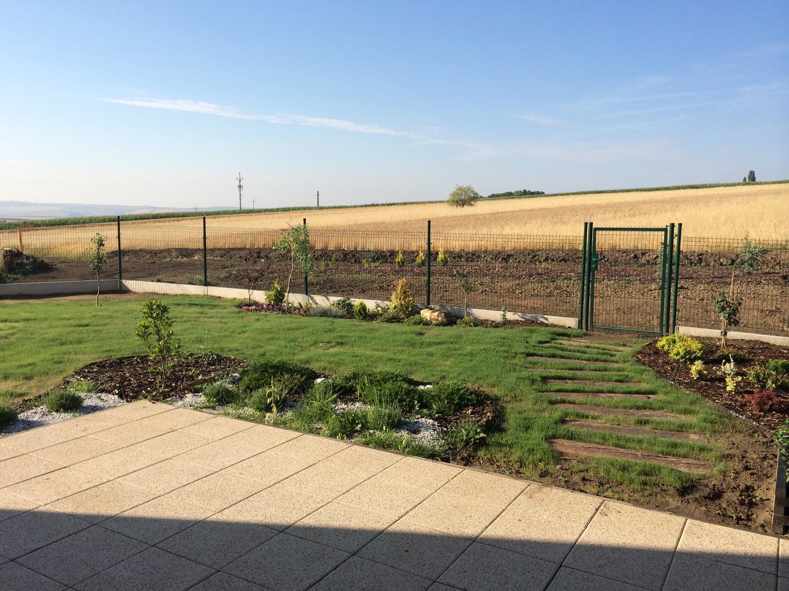 Zahrada- jak to vsechno zacalo.. - 10.den a vypada to ze travniku pisek svedci :)