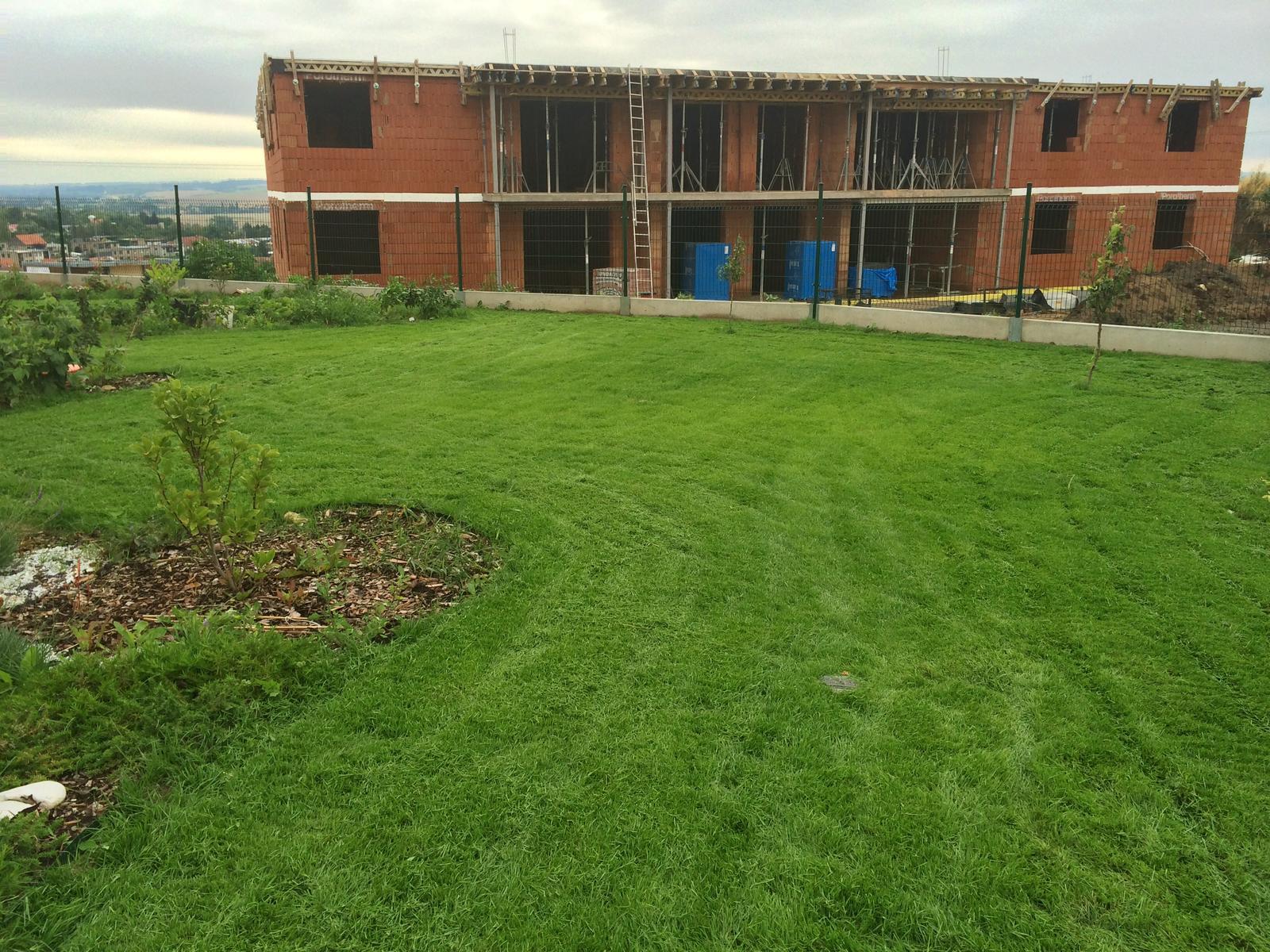 Zahrada- jak to vsechno zacalo.. - nas 4.tydenni :)
